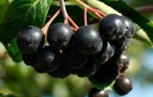 fructe aronia 1