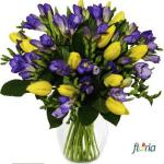 floria4
