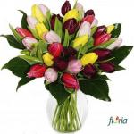 floria5